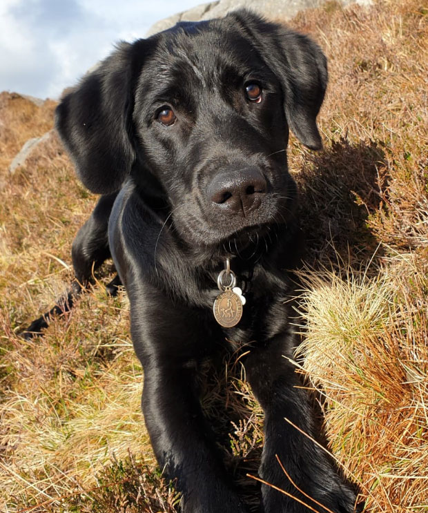 Izzy - Guide Dog for the Blind